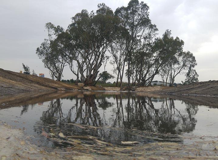 חורשת האקליפטוס פארק תעשיות עח אחרי (4)